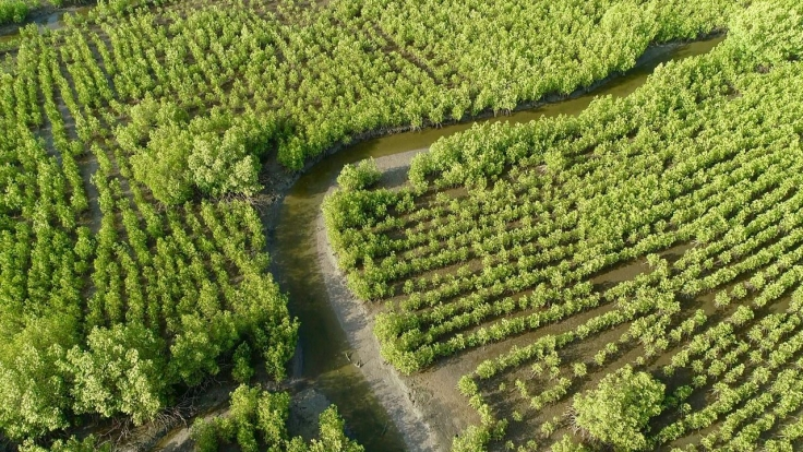 Geheimnisvolle Mangroven bei Arte (Foto)