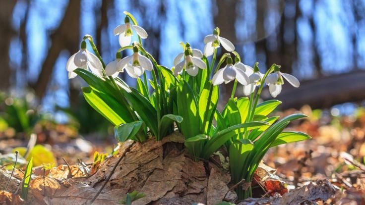 Frühlingstemperaturen mitten im Winter!