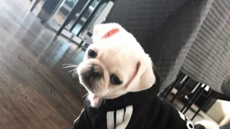 Dieser süße Hund kann Mario Götze jetzt trösten. (Foto)