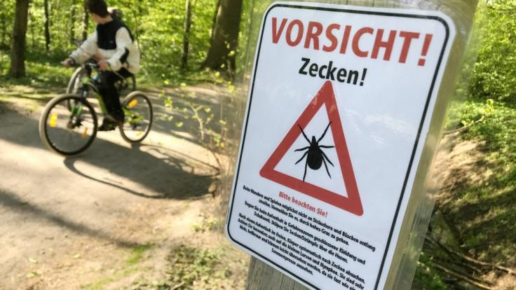 Vorsicht vor Zecken: Das Robert-Koch-Institut hat 169 Kreise in Deutschland als FSME-Risikogebiete definiert. (Foto)