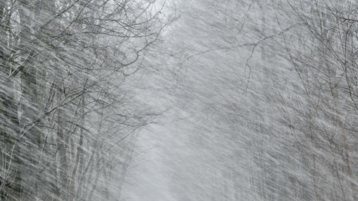 Anfang Februar kommt der Winter nach Deutschland. (Foto)