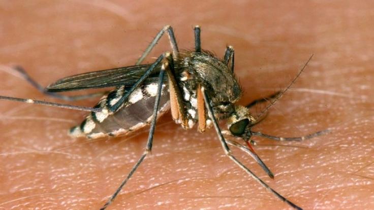 Ein verbreitetes Mittel zur Insektenabwehr schädigt menschliche Nervenzellen. (Foto)