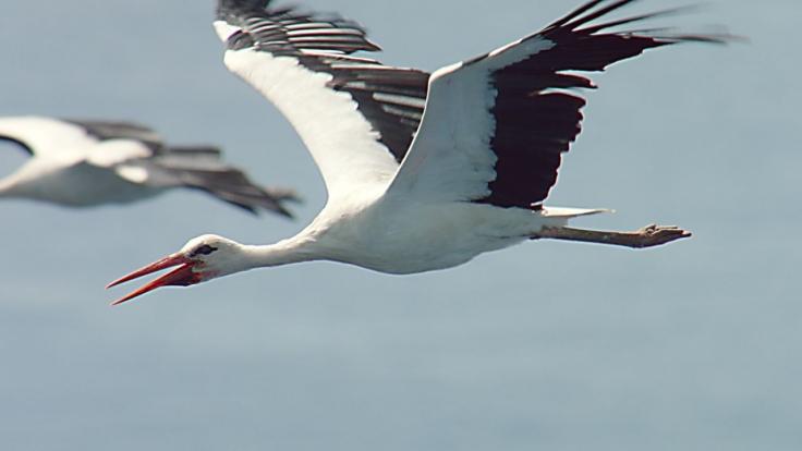 Zugvögel bei 3sat (Foto)