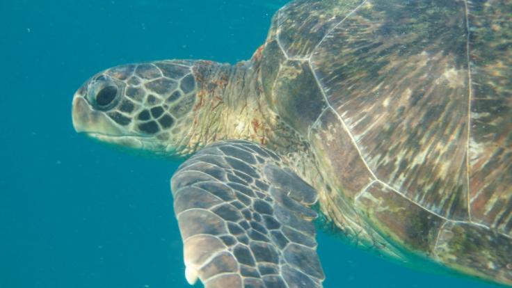 Hawaii - Tropensturm Walaka versenkt komplette Insel