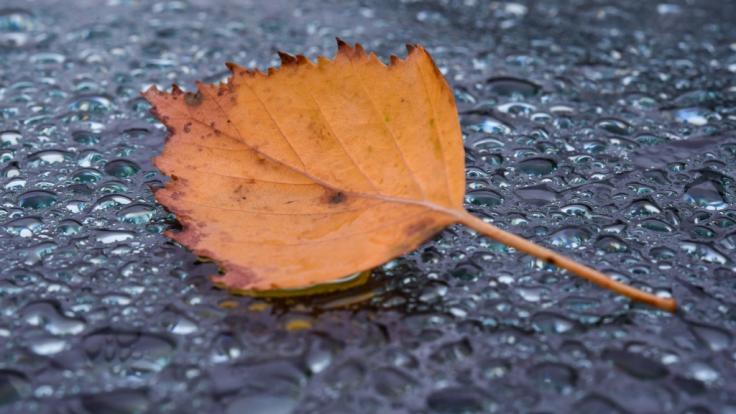 Im Oktober kehrt der Herbst mit Regen und sogar erstem Schnee ein. (Foto)