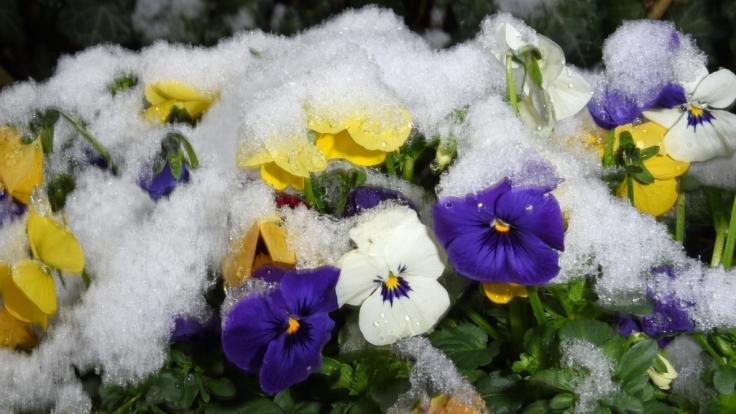 Am Wochenende werden die Uhren auf Sommerzeit umgestellt - doch dem Wetter scheint das egal zu sein, Meteorologen sagen Schnee bis ins Flachland vorher. (Foto)