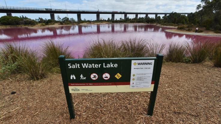 Der See im Westgate Park erstrahlt im knalligen Pink. (Foto)