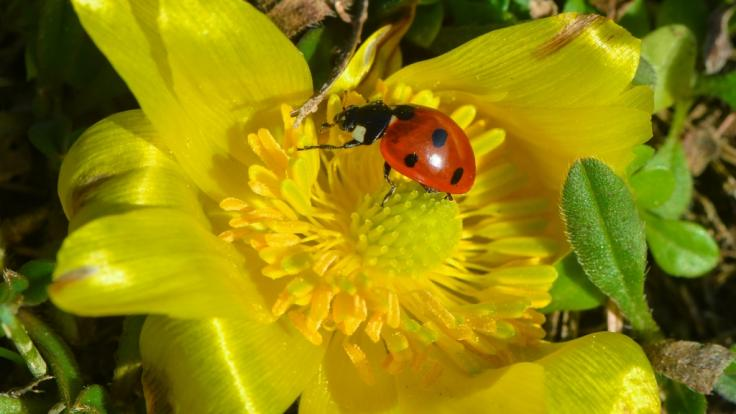 Ersten Wetterprognosen zufolge könnte sich der Frühling im März und April von seiner freundlichen Seite zeigen.