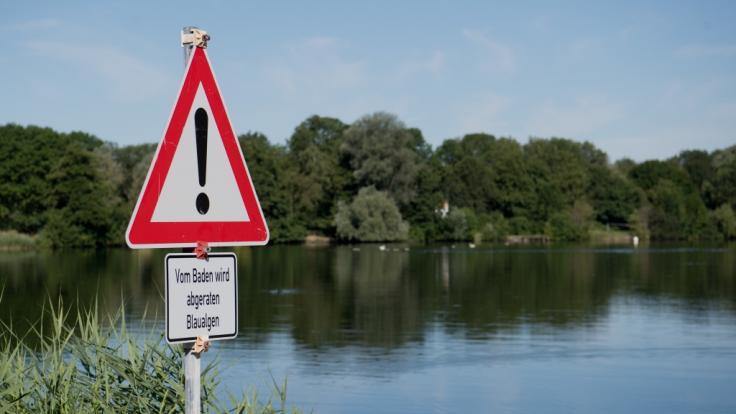 Die ersten Baderegionen warnen vor Blaualgen auf Gewässern. (Foto)