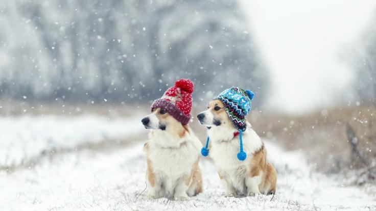 Wie kalt wird es im Dezember 2021? (Foto)