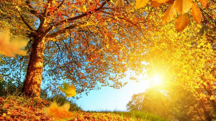 Zum Ende der Woche bescheren Temperaturen bis 25 Grad einen goldenen Oktober.
