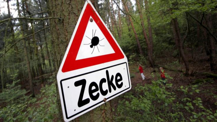 Im Sommer 2018 gilt für Deutschland besondere Vorsicht vor infizierten Zecken. (Foto)