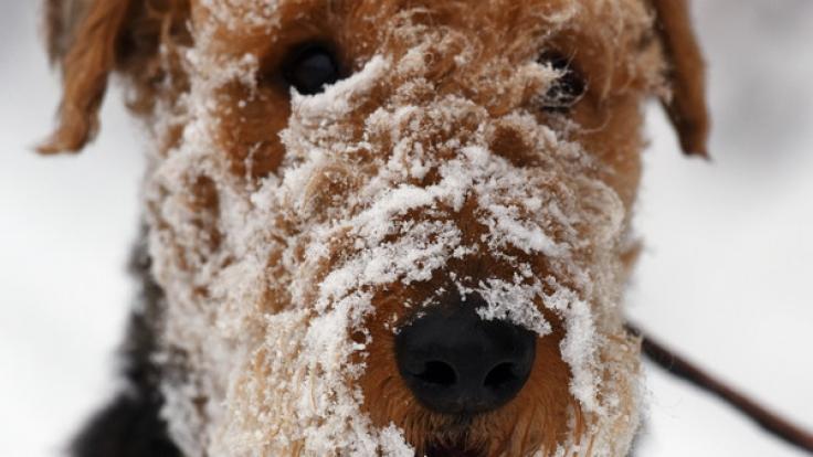 Pünktlich zum Novemberausklang wird in Deutschland Schnee erwartet.