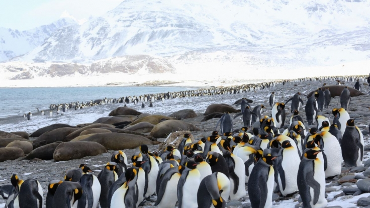 Terra X: Kielings kalte Welt bei ZDFneo (Foto)