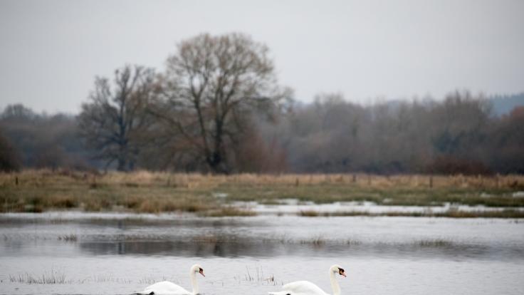 Der kleine Greyson (2) wurde leblos aus einem See in der englischen Grafschaft Hampshire gezogen - nach dem Tod des Kindes vermeldete die Polizei eine Festnahme (Symbolbild). (Foto)