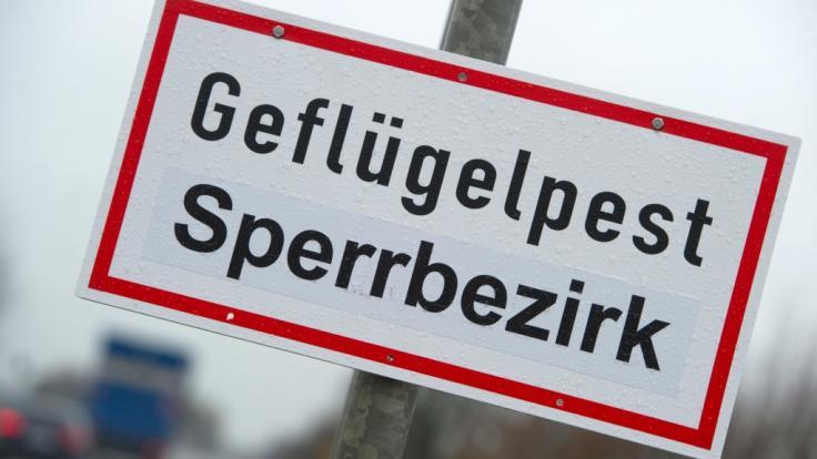 Der Nachweis eines gefährlichen H5-Vogelgrippe-Erregers in Deutschland kommt nicht überraschend. (Foto)