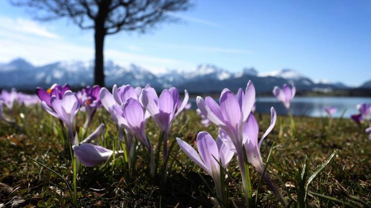 Der Monat März verabschiedet sich in Deutschland mit bis zu 25 Grad - doch zu Ostern droht laut Wettervorhersage ein heftiger Temperatursturz. (Foto)