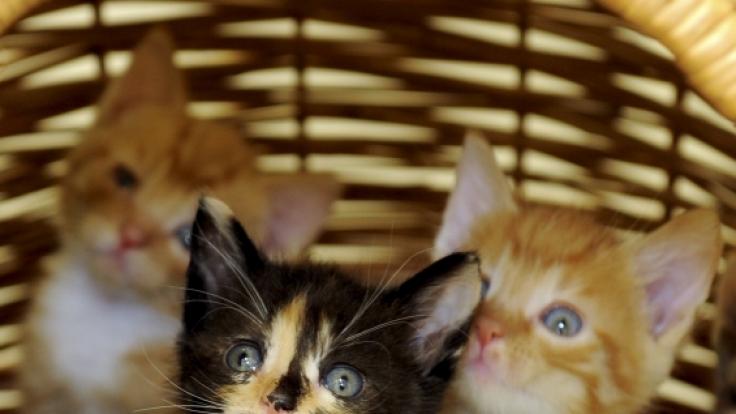 Wehrlose Kätzchen werden von den Usern brutal misshandelt.