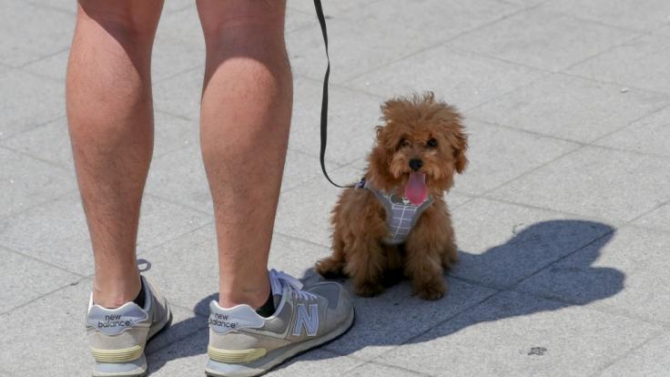 """Nordkoreas Machthaber Kim Jong-un zufolge ist die Haltung von Hunden als Haustier""""dekadent und spießbürgerlich"""". (Foto)"""