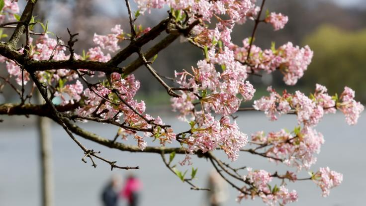 Am Mittwoch, dem 20. März 2019, ist kalendarischer Frühlingsanfang. (Foto)