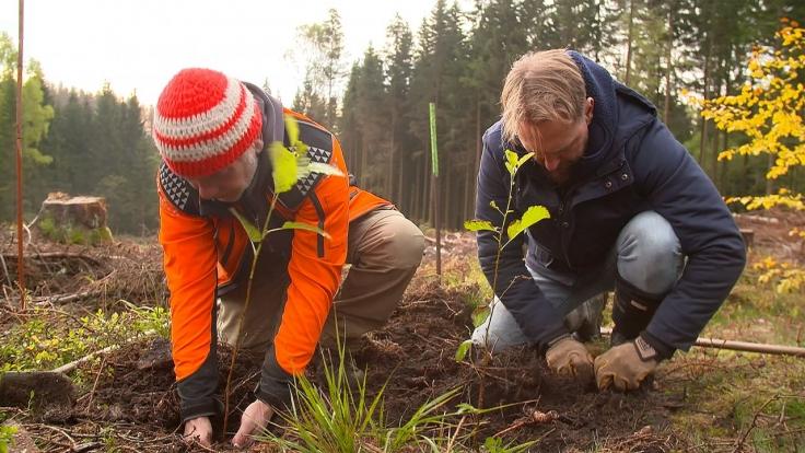 Operation Wald - So retten wir unseren Planeten! bei Sat.1 (Foto)