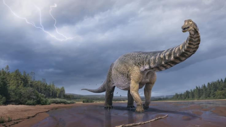Eine künstlerische Darstellung zeigt den Dinosaurier Australotitan cooperensis, oder den Südtitan. (Foto)