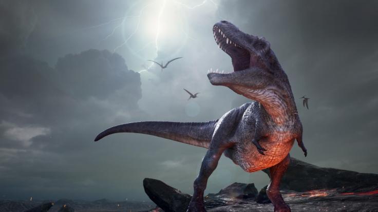 Eine Frau in Florida hielt einen vermeintlichen Baby-Dinosaurier auf Video fest. (Foto)