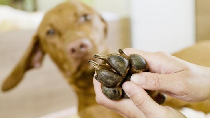 Damit das Qi wieder fließt: Akupressur für Hunde (Foto)