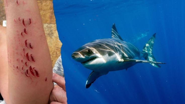 blutige attacke horror urlaub auf gran canaria hai verfolgt