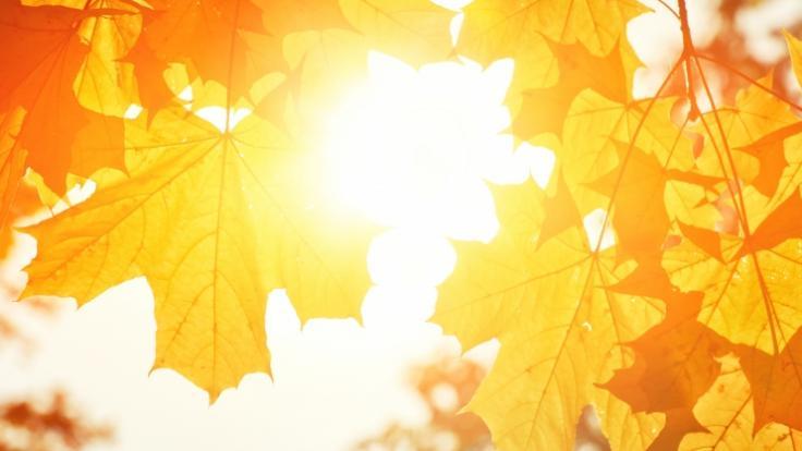 Zum Monatswechsel zeigt sich der Oktober von seiner goldenen Seite. (Foto)