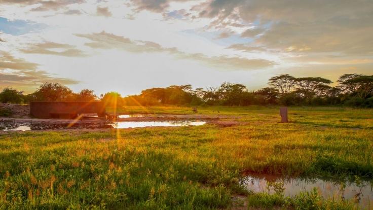 Wasserlöcher - Oasen für Afrikas Fauna bei Arte (Foto)