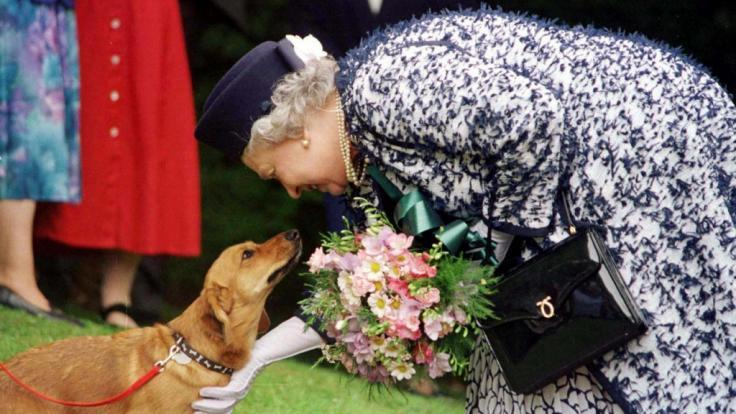 Die britische Königin Elizabeth II. streichelt am 20.05.1998 einen ihrer Corgi-Hunde. (Foto)