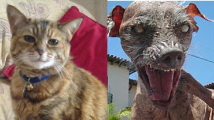 Mussten ihren Titel nach dem Tod abgeben: die älteste Katze und der hässlichste Hund.