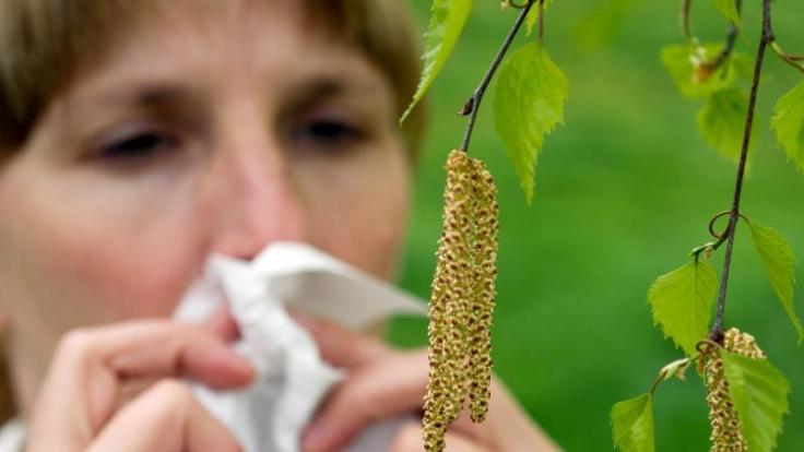 Vor allem Birkenpollen machen vielen Allergikern zu schaffen. Diese sollten ihre Beschwerden nicht auf die leichte Schulter nehmen.