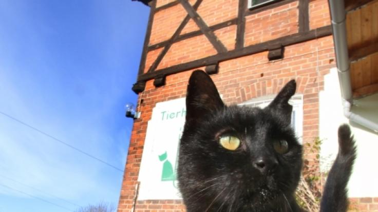 Innerhalb eines Monats verschwanden fünf schwarze Katzen. Ist ein Satanist schuld? (Symbolbild)