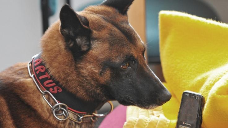 Eine kolumbianische Verbrecherbande hat ein 70.000 Dollar Kopfgeld auf einen Spürhund ausgesetzt.