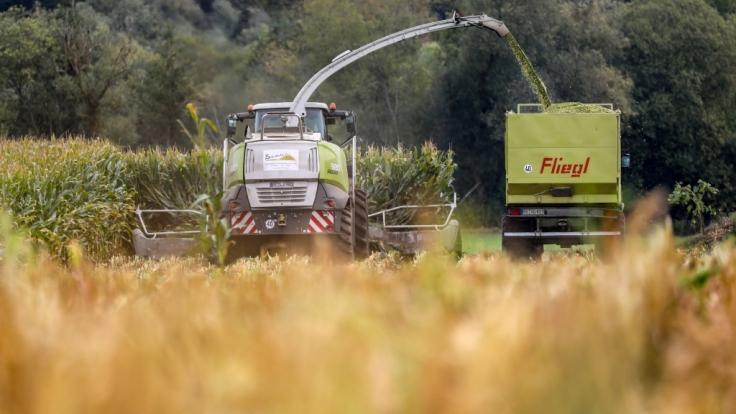 Bei Erntearbeiten mit einem Maishäcksler ist im nordrhein-westfälischen Erftstadt eine Leiche in einem Feld gefunden worden (Symbolbild). (Foto)