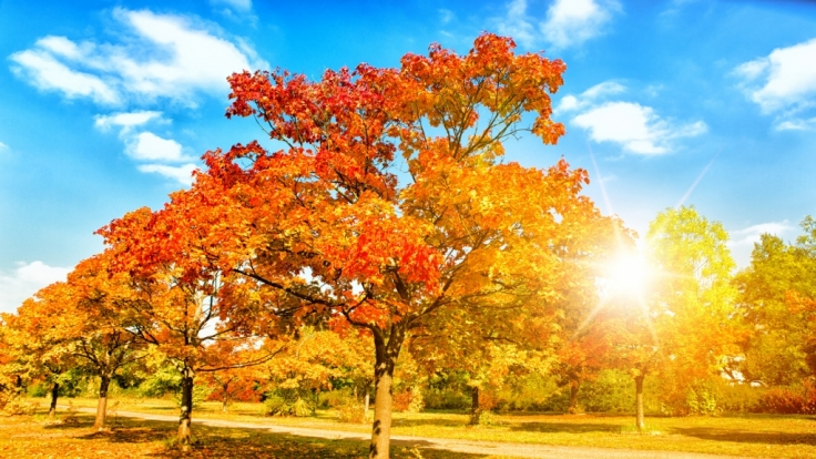 Laut 100-Jährigem Kalender soll der Herbst warm und sonnig werden.