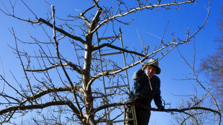 Der Februar ist die beste Zeit, um den Obstbäumen einen Schnitt zu verpassen, damit die Ernte ertragreich ausfällt.