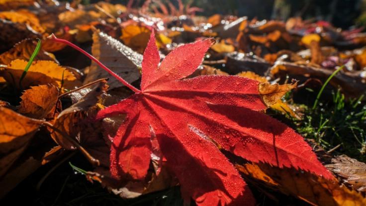 Der Hitze-Herbst ist vorbei: Jetzt übernehmen Frost und Nebel das Wetter-Ruder.