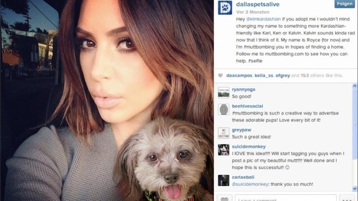 Kim Kardashian wird dank Muttbombing zur Hundevermittlerin.