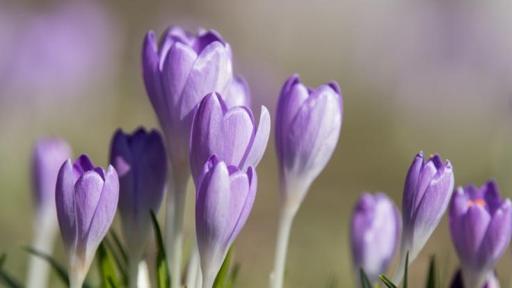 Dürfen wir uns auf einen warmen Frühlingsanfang freuen? (Foto)