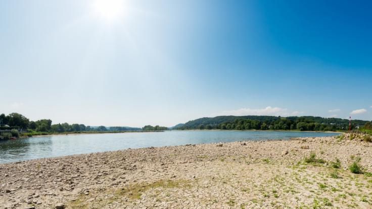 Durch die langanhaltende Hitze ist der Uferbereich des Rheins ganz ausgetrocknet.