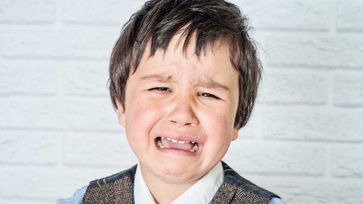 Nicht jedes Haustier eignet sich zum Kuscheln, wie ein Vierjähriger aus den USA schmerzvoll erfahren musste (Symbolbild). (Foto)