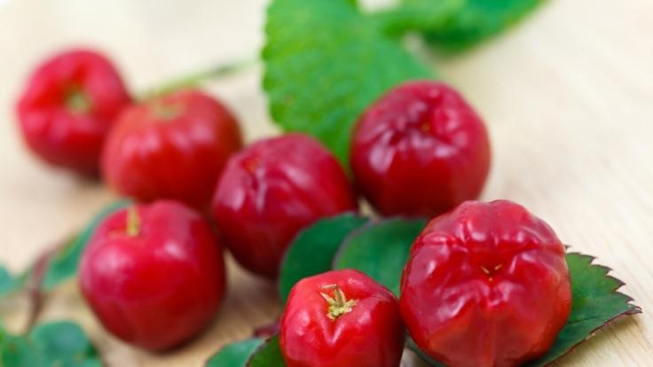 Die Acerolakirsche liefert wichtige Nährstoffe.
