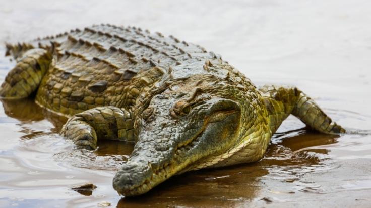 Ein Krokodil hat einen achtjährigen Jungen gefressen.