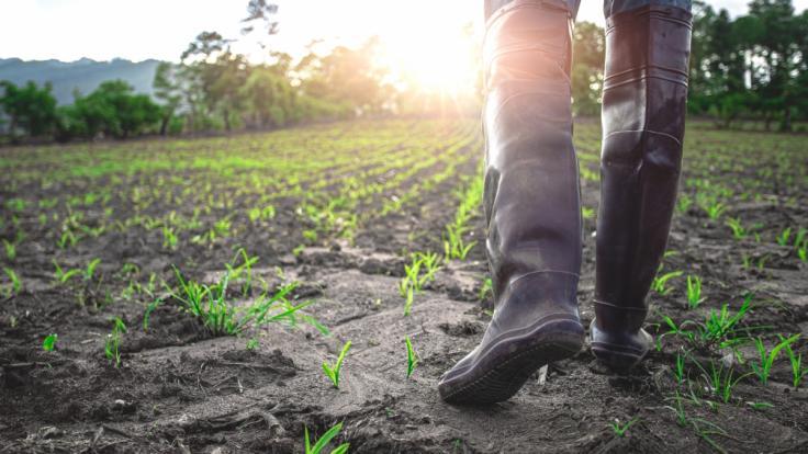 Was besagen die Bauernregeln im Juli?