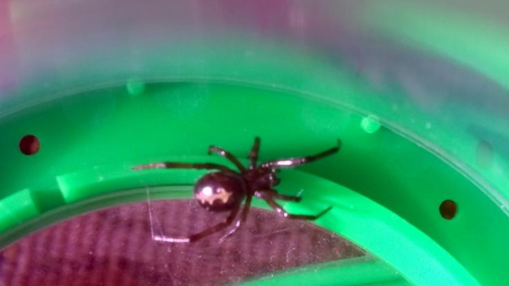 In Großbritannien kämpfte eine junge Frau nach einem Spinnenbiss um ihr Leben. (Foto)